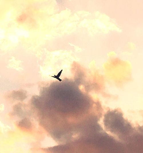 Bird Flying Animal Themes Cloud - Sky Low Angle View Mid-air Scenics Beauty In Nature Cloudscape Nature Orange Color Tranquility Tranquil Scene Outdoors Majestic Atmospheric Mood Paradise Freedom Freebird Sky Clouds And Sky Day