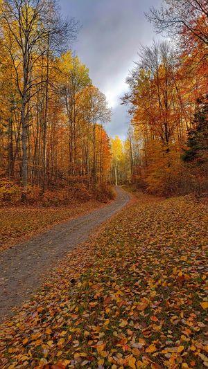 Autumn leaves on land against sky