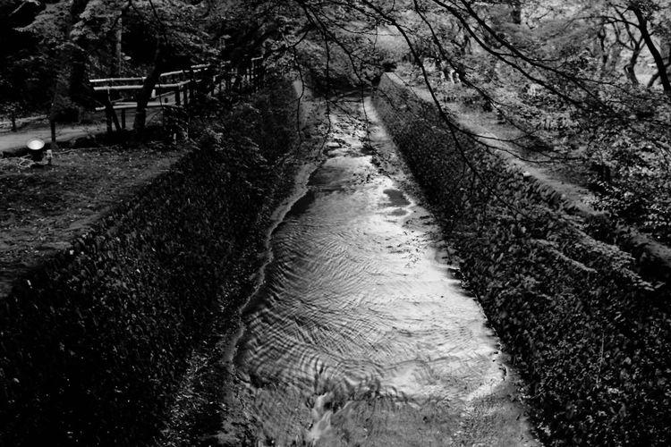 BESSA-T ELMARIT-M 28mm F2.8 Light And Shadow Enjoying Life Hello World Blackandwhite モノクロフィルム Acros100 Taking Photos Film Photography EyeEm Best Shots 京都