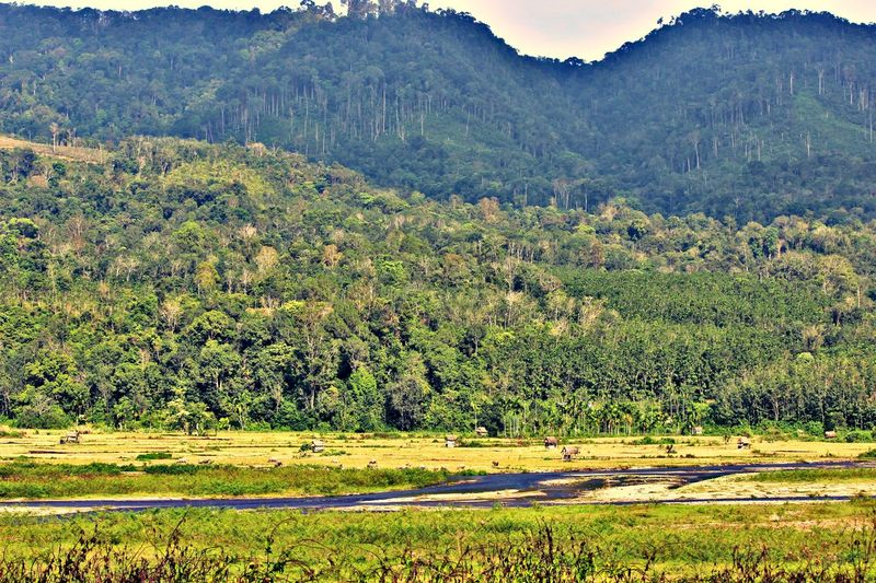 River View River Forest Trees Fieldscape Fields Field Village Village Life Rao Pasaman Pasaman West Sumatera