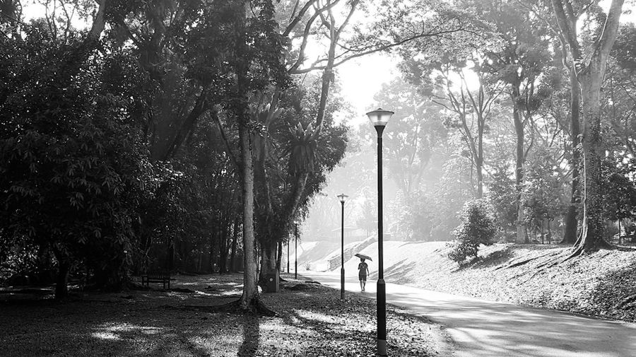 Nature Park Outdoors Tree Beauty In Nature Sunray Blackandwhite Photography