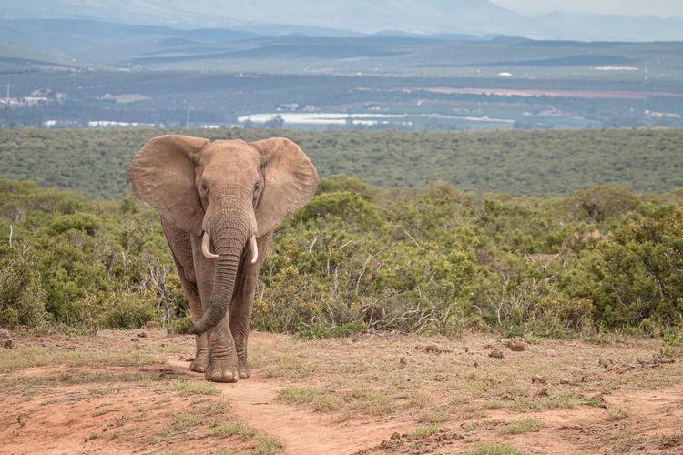 Elephant walking on a land