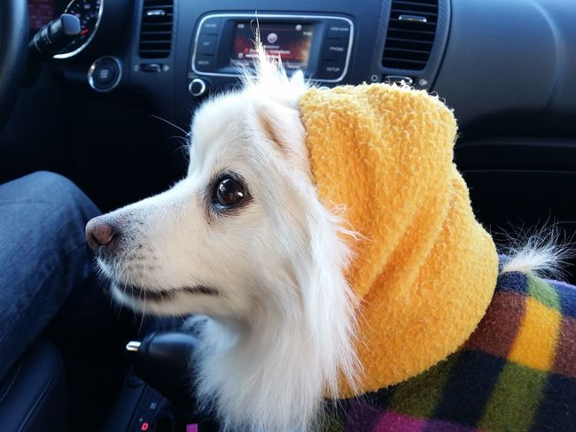 Its Cold Outside EyeEm Around The World Cute Pets Dog Sweater Pet Costume Bye Bye Road Trip My Best Friend Hanging Out Pets Showcase: January January 2016 HOODIES Spokane Wa Winter Winter Day Winter_collection