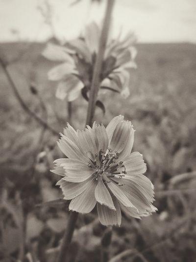 Wild flowers No