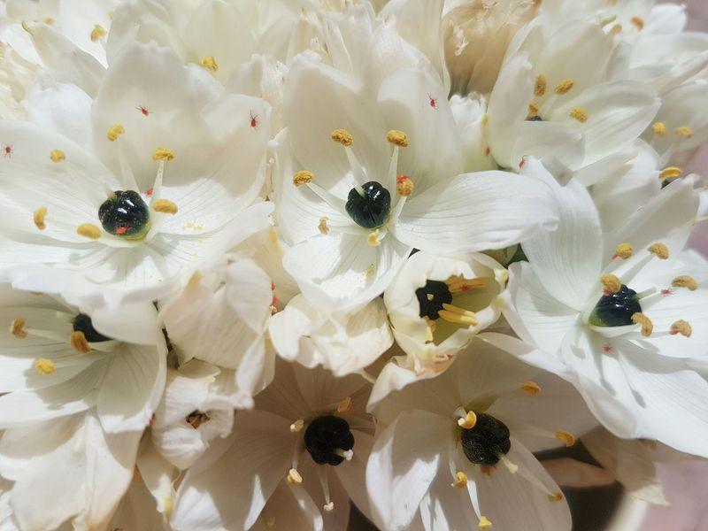 Springtime EyeEm Selects Flower Head Flower Insect Close-up Petal In Bloom Pollen Stamen Blooming