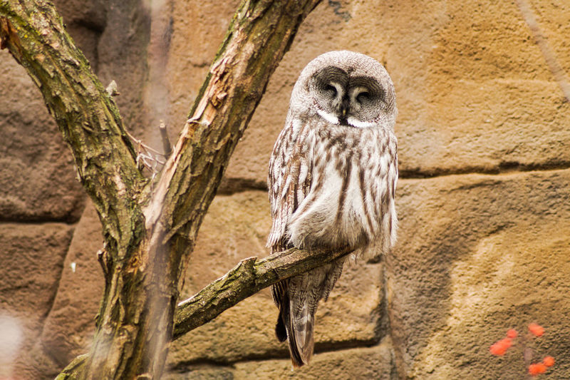 Portrait of a bird Animal Wildlife One Animal Animals In The Wild Vertebrate Day Mammal No People Nature Zoo Bird Tree Full Length Outdoors Animals In Captivity Bird Of Prey Branch Owl