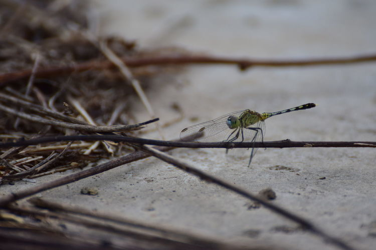 Animal Wildlife Animals In The Wild Close-up Dragonfly Nature Insects Nature One Animal ธรรมชาติ สัตว์น้อยร่วมโลก สัตว์มีปีก แมลงปอ First Eyeem Photo