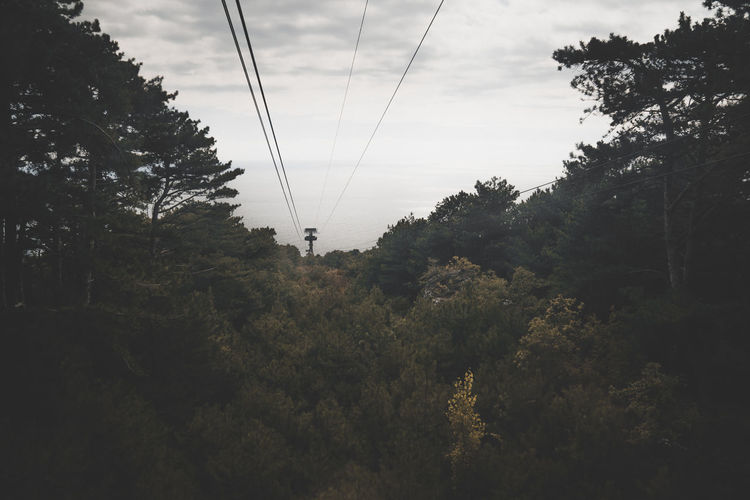 Beauty In Nature Cable Cloud - Sky Connection Day Electricity  Electricity Pylon Forest Growth Land Low Angle View Nature No People Outdoors Plant Power Line  Power Supply Sky Technology Tranquility Tree