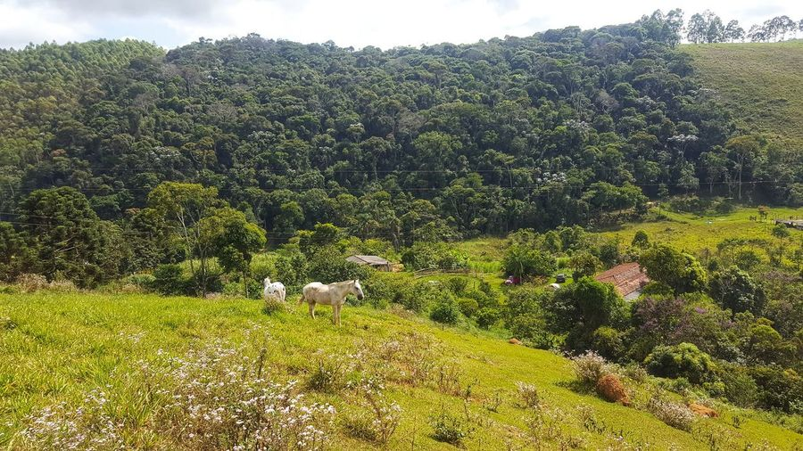 Rural scene Rural Rural Scene Rural Scenes Agriculture Santos Dumont Farm Farm Life Landscape Landscape_Collection Landscape_photography Nature Nature_collection Naturelovers EyeEm Nature Lover EyeEmNewHere Tree Green Color Grass Lush Foliage Greenery Farmland Spring Lush Green Countryside Lush - Description Agricultural Field Forest Blossoming  Blossoming  Blossoming  Blossoming  Summer Exploratorium This Is Latin America Going Remote