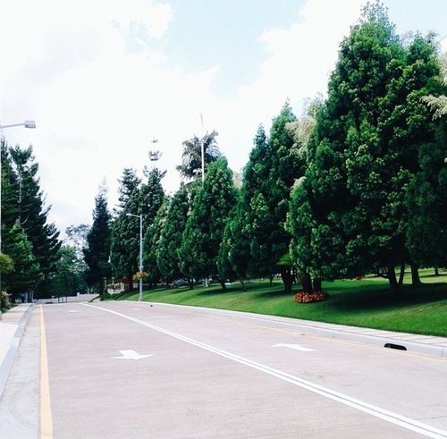 My Favorite Place Tree Road Transportation Solitude Empty Tranquil Scene The Way Forward Tranquility Long Sky Day Green Color Green Outdoors Countryside Cloud Nature Country Road Surface Level Growth Philippines Davao