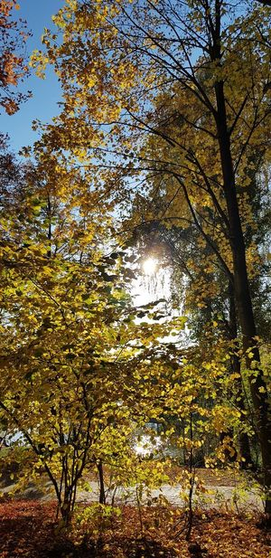 Sunlight Lakeview No People Outdoor Photography The Colors In Autumn Tree Full Frame Forest Backgrounds Branch Sky Close-up