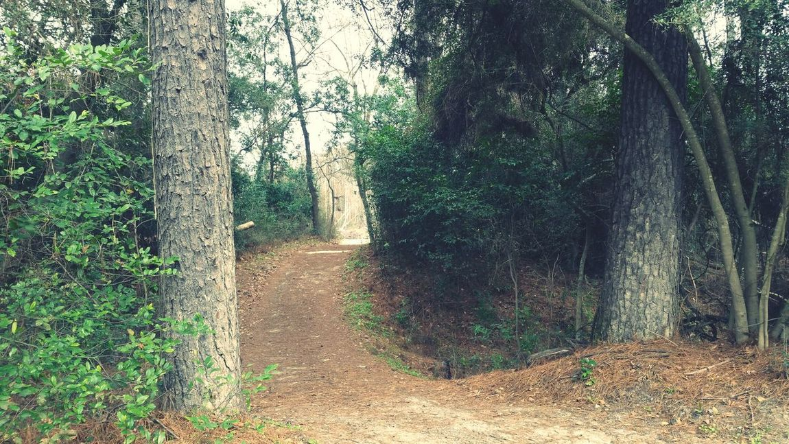 Wider shot of the path to the creek Tree Growth Nature No People Day Green Color Outdoors Creeks EyeEm Best Shots EyeEm Gallery Beauty In Nature Popular Photos Texas Parks And Wildlife