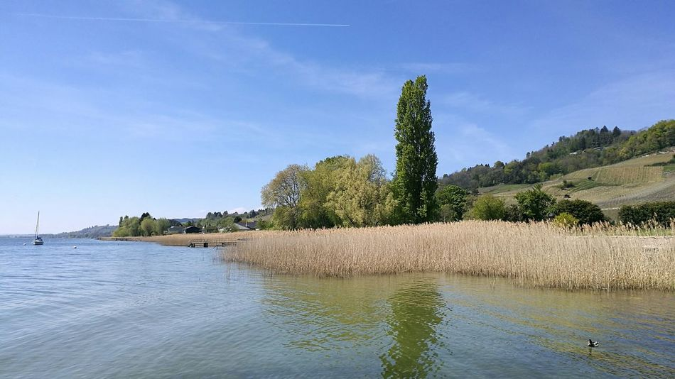 Lac De Morat Switzerland Fribourg Switzerlandpictures Swissbeauty Suisse  Spring2017 Water Landscape Nature Lake Tranquility Tree Outdoors Blue Sky Beauty In Nature Scenics Day No People