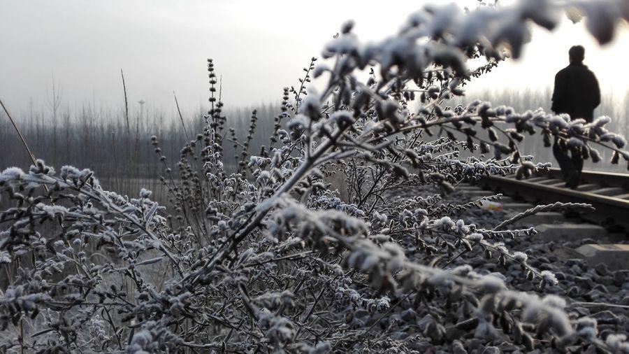 还没霜冻呢,竟是如此的冷。。。In新元矿附近From my huawei Ascend Mate7 EyeEmNewHere EyeEmNewHere EyeEmNewHere