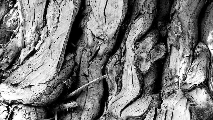 Backgrounds Bark Close-up Cracked Day Full Frame Growth Ivy Knotted Wood Nature No People Outdoors Pattern Pruned Rough Textured  Tree Tree Trunk Wood - Material Wood Grain