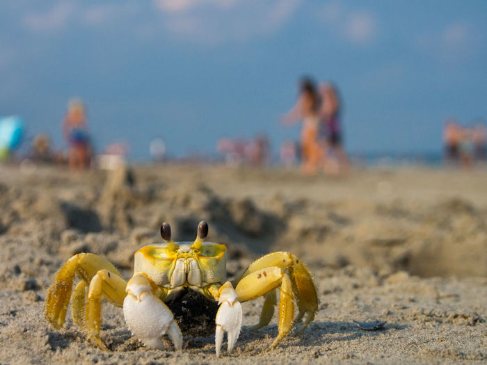 Close-up of crab on beach against sky