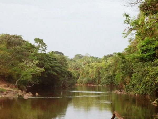 The wonderful West Goiano - land where I was born. ;))) Water Water_collection Water Reflections Forest In The Forest Cerrado Glad Sky Collection