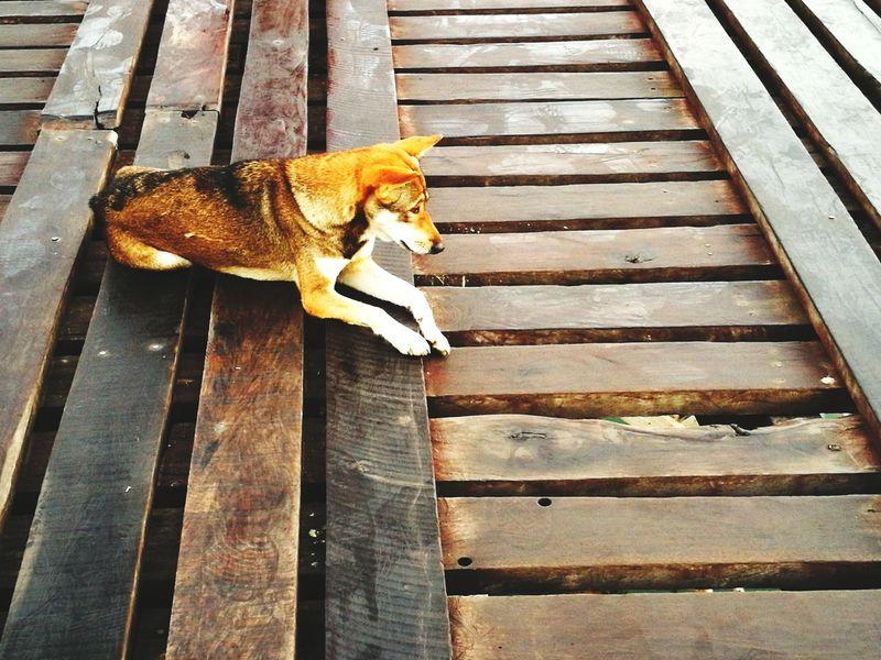 Dog Outdoors Dogoftheday Dog Photography Dog Waiting Domestic Cat Feline One Animal Pets Wood - Material No People Animal Domestic Animals Animal Themes Mammal Day