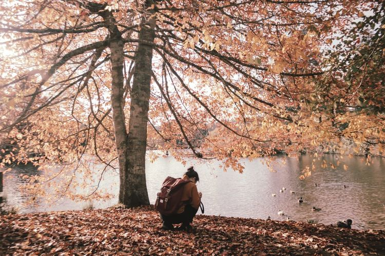 Rear view of woman sitting in park during autumn