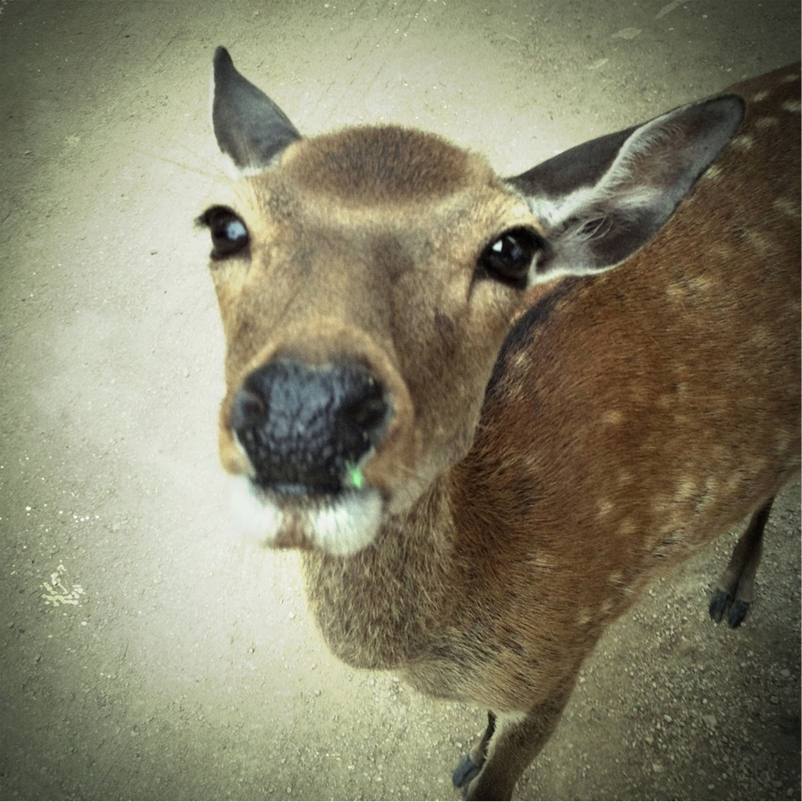 animal themes, one animal, mammal, domestic animals, animal head, portrait, close-up, indoors, looking at camera, wildlife, no people, high angle view, animals in the wild, pets, day, zoology, auto post production filter, full length