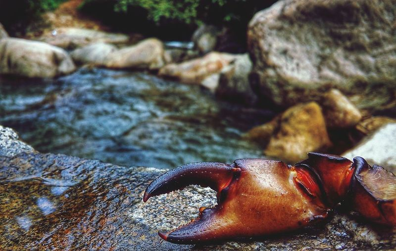 special hand of CRAB . from kerala , india Naturelovers Silence Of Nature Seascape River Side Crab Life Underwater Life Kerala The Gods Own Country ;) Singular Focus Amazing Nature Brighter Day River View River Rocks