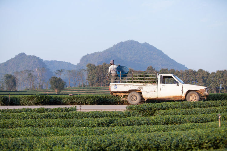 Rear View Of Man Standing On Pick-Up Truck At Farm Against Clear Sky