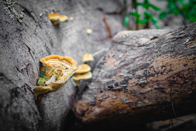 A mushroom on