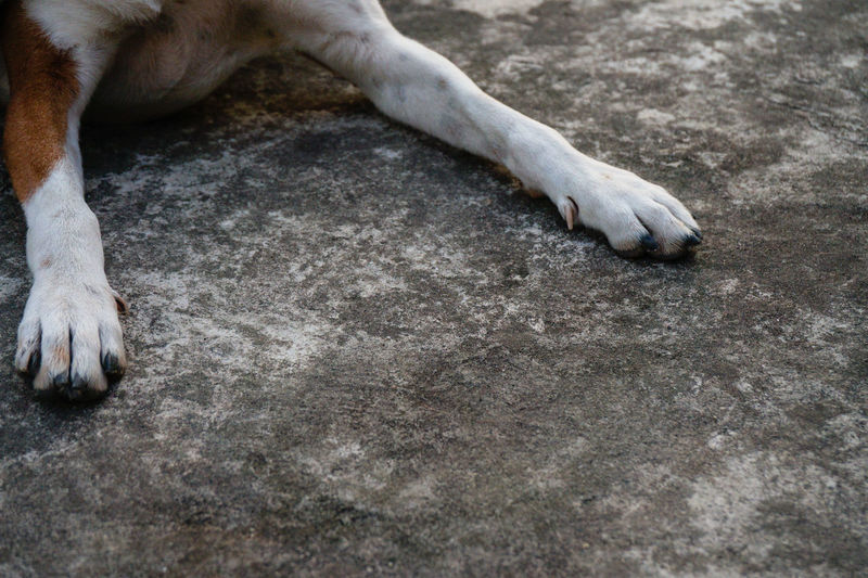 Happy feet Day Dog Dog Feet Dogs Of EyeEm Leisure Activity Nature Outdoors Pet Pet Photography  Sand Sandy Tranquility Two Is Better Than One Two Is Better Than One.