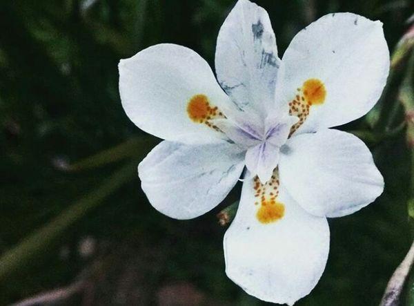 Nature Flower First Eyeem Photo