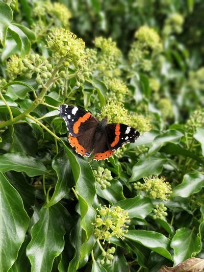 Insect Leaf One Animal Plant Animal Wildlife Animals In The Wild Animal Themes Butterfly - Insect Nature No People Close-up Day Outdoors Green Color Beauty In Nature Growth Flower Full Length Multi Colored Fragility EyeEmNewHere