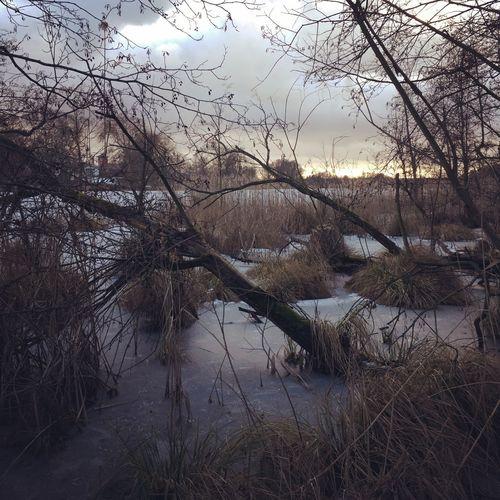 Bare tree in lake against sky