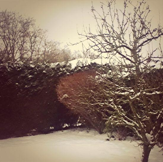 La Neige C'est Comme Le Paradis Qui Vient A Nous