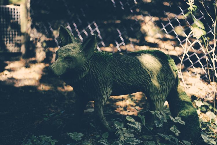 Animal Themes Day Domestic Animals Field Focus On Foreground Full Length Green Color Livestock Mammal No People One Animal Outdoors Zoology