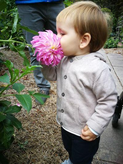 Flower Child Childhood Flower Head Blond Hair Girls Standing Close-up Blooming Hydrangea Single Flower Fragility