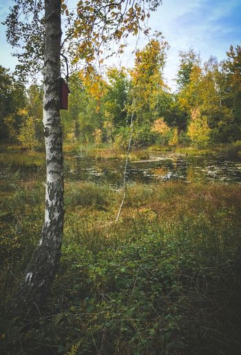 Some Autumn Trees   Tree Tree Trunk Tranquil Scene Tranquility Growth Forest Non-urban Scene Scenics Nature Beauty In Nature WoodLand Branch Day Sky Tree Area Countryside Solitude Green Color Outdoors Ethereal Autumn Eye4photography  EyeEm Nature Lover EyeEm Gallery EyeEmBestPics