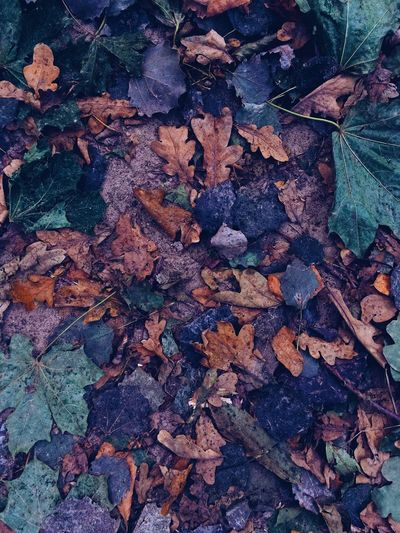 Leaf Dry Full Frame High Angle View Autumn Day No People Outdoors Change Nature Backgrounds Large Group Of Objects Close-up Fragility