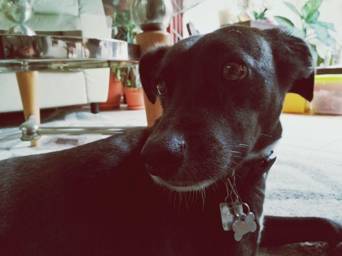 Ringo The Dog Costa Rica Home Indoor Dogs Of EyeEm