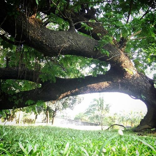 Now this is a master bender. 😂 Nature Tree Green Earth Photography