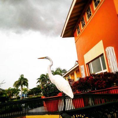 Rain Caribbean Vacations Cool