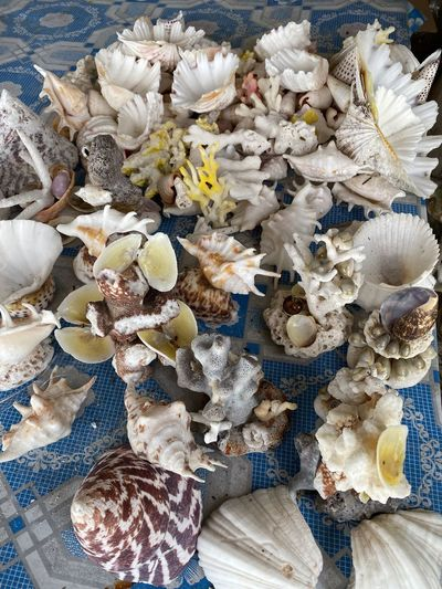 High angle view of shells for sale at market