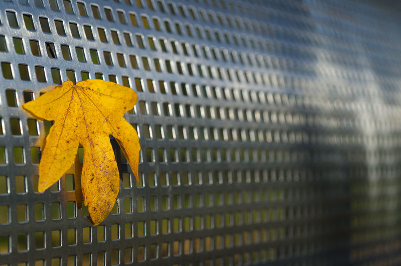 Autumn Leaf on Metal Grate Autumn Barrier Change Close-up Concept Day Fence Focus On Foreground Grate Ideas Leaf Metal Metal Grate Nature No People Outdoors Pattern Plant Part Protection Safety Security Yellow