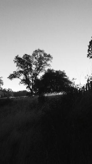 Tree Tree Area Rural Scene Silhouette Sky Grass Landscape