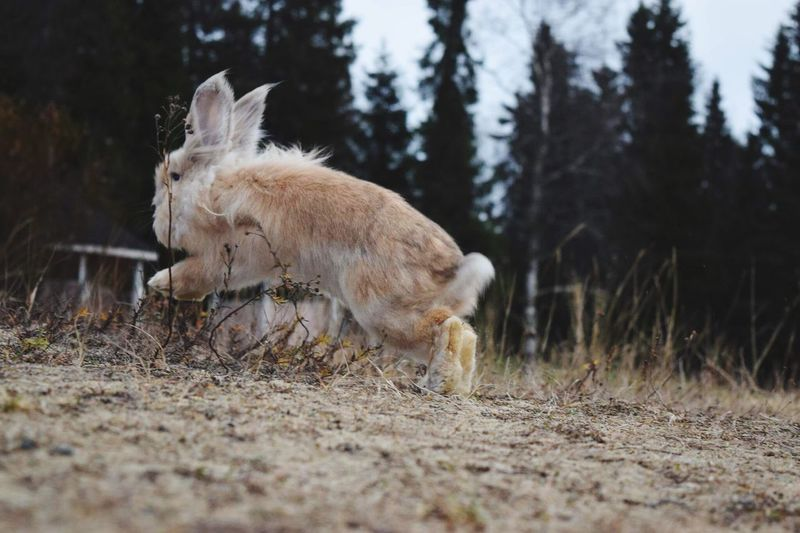 Animal Themes Mammal Domestic Animals One Animal Field No People Young Animal Nature Animals In The Wild Grass Outdoors Day Pets Beauty In Nature Check This Out Rabbit