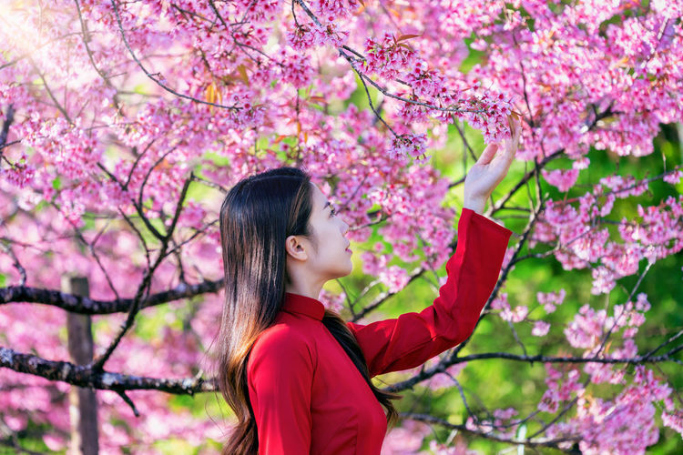 Woman looking at cherry blossom