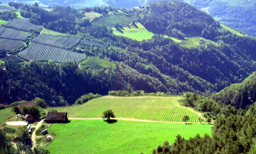 Landscape South