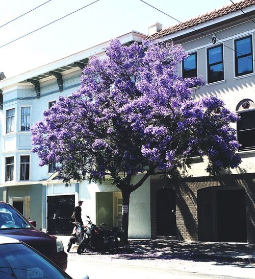 Purple Flowers San Francisco Streetphotography Nature City Cool Colors