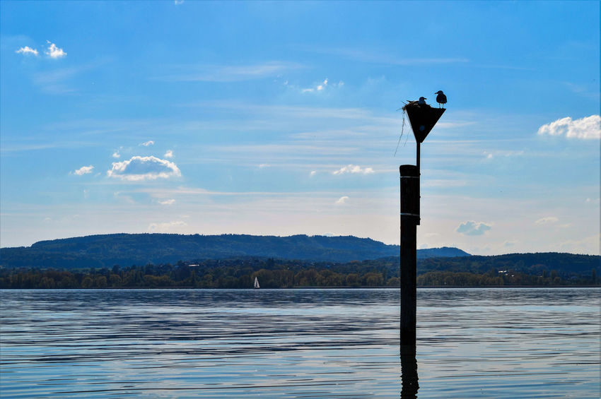 Seagulls Nesting on a Post near the Shore... Seagull Bird Birds Birds_collection Birds Of EyeEm  Animals Animal Themes Animals In The Wild On Water Blue Spring Tranquil Scene Lake Constance Lake Lake View Feel The Journey Nature Nature_collection Hanging Out Reichenau Fine Art Photography