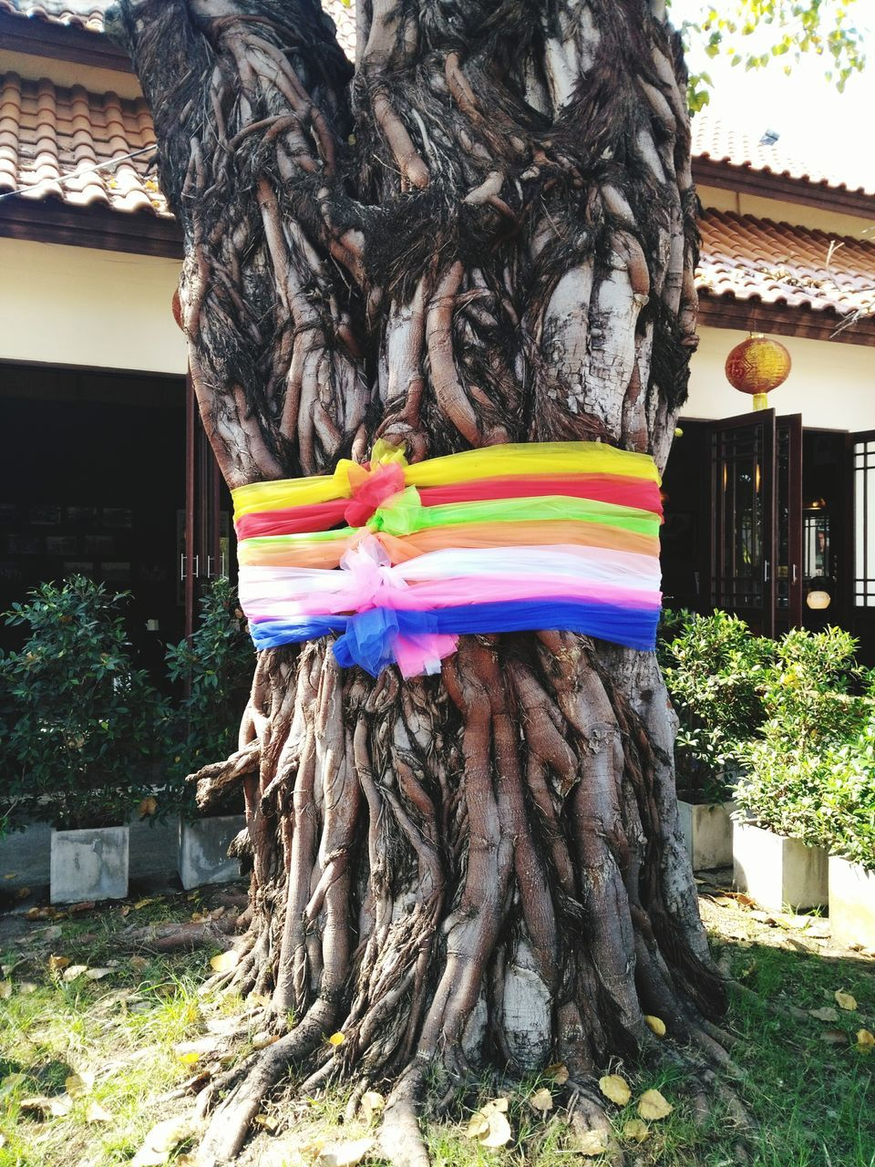 multi colored, tree, outdoors, tree trunk, day, no people, built structure, building exterior, architecture, nature, close-up