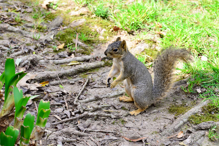 High angle view of squirrel on field