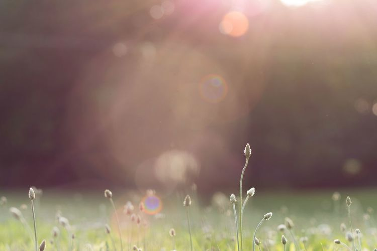 Think Spring. Spring Backgrounds #Wallpaper Grass Weeds depth of field Bokeh Sunlight Warm Lense Flare Light Leak Outdoors Backyard Home Nature Sun Outdoors Flower Defocused No People Grass Field Rural Scene Day Growth Sunlight Plant Summer Close-up Beauty In Nature